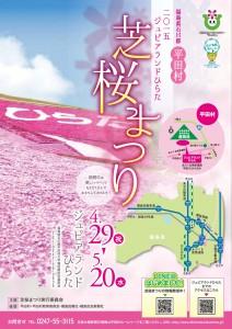 2015shibazakuramaturi1-1
