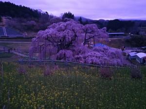 20180406_郡山市滝桜