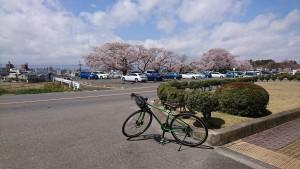 春のサイクリング・3時間コース(2020年4月16日)