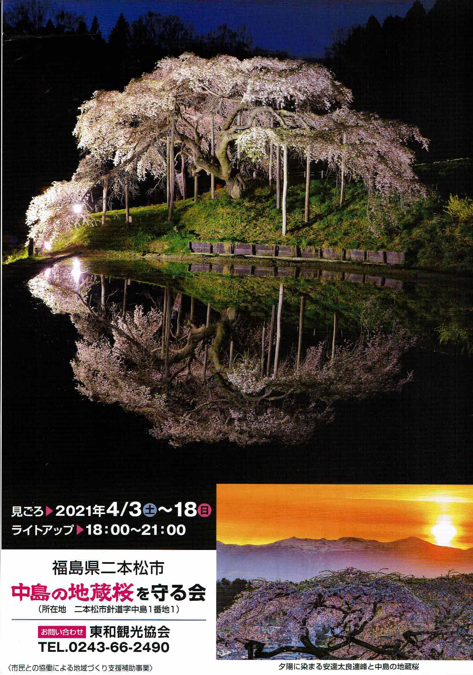 中島の地蔵桜がライトアップされます!